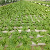 温室水培种植平铺式管道栽培床