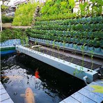 家庭农场庭院式水耕鱼菜系统