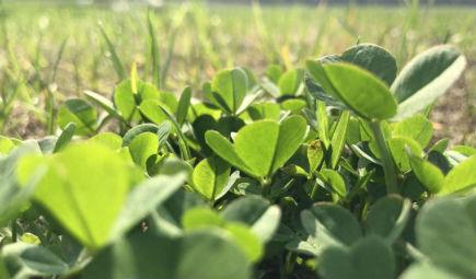 三大省份出台相应规划,茶油行业前景可期