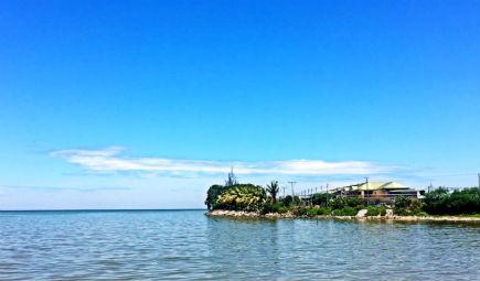 水體富營養化問題嚴重 藻類計數儀護航清澈湖水