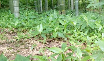 �V�|省2019年土壤污染防治工作方案