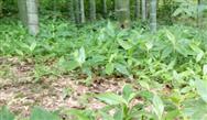 广东省2019年土壤污染防治工作方案