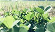 農業農村部關于做好中國農民豐收節組織實施工作的指導意見
