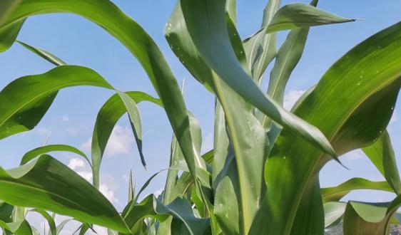 農加工業發展迅速 為深加工設備市場帶來利好