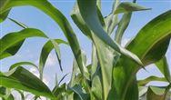 农产品加工业发展迅速 为深加工设备市场带来利好