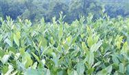 《北京市关于加快推进农业机械化和农机装备产业转型升级的实施意见》的通知