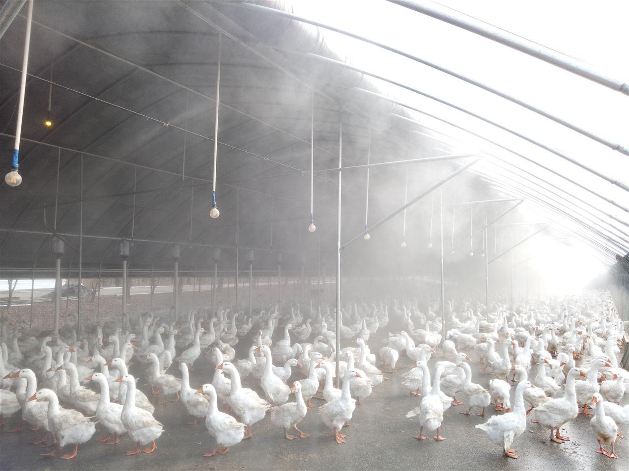 养殖场喷雾消毒